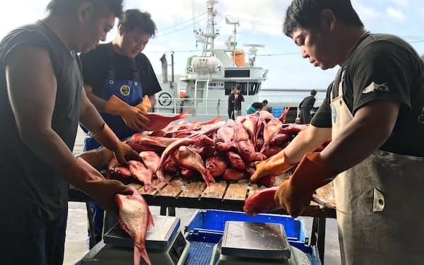 キンメダイやヒラメなど新たに10~20魚種が漁獲量管理の対象となる可能性がある(静岡県下田市)