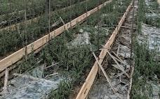 農業を襲う巨大台風、「甚大な被害」の先の一手