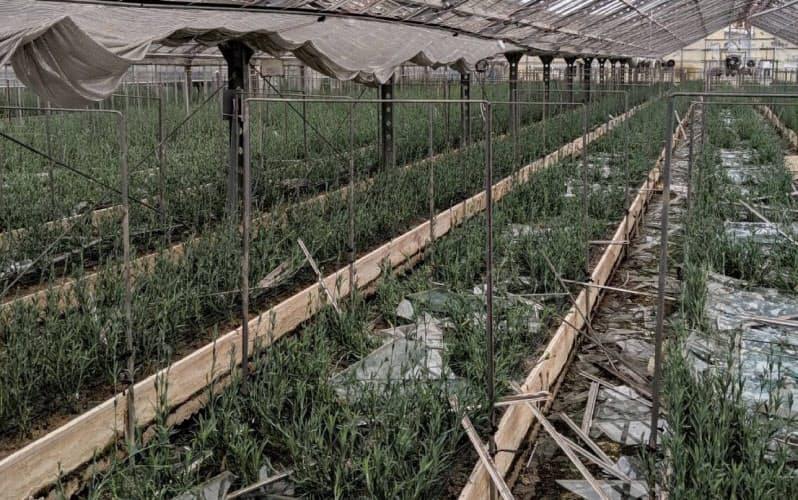 2019年の台風15号でガラスが割れ、散乱したカーネーションの栽培ハウス(千葉県南房総市)
