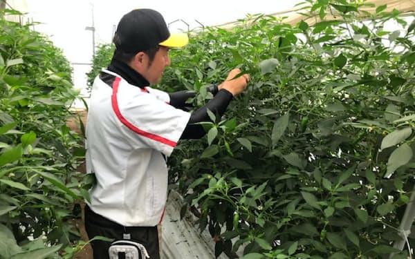 人手に頼っていた農薬散布や収穫に、人工知能(AI)による画像認識技術などを活用する