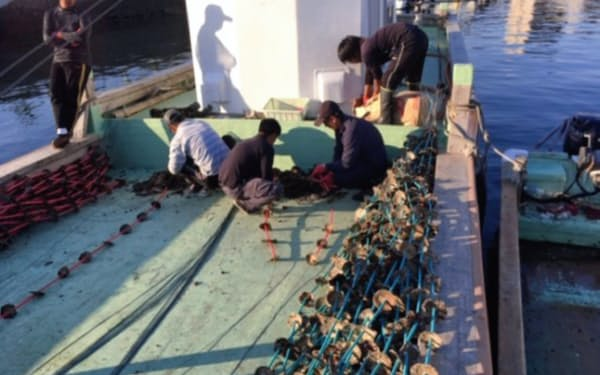 クラレなどはカキの養殖に生分解性プラスチック製のパイプを使う(広島県の養殖場)