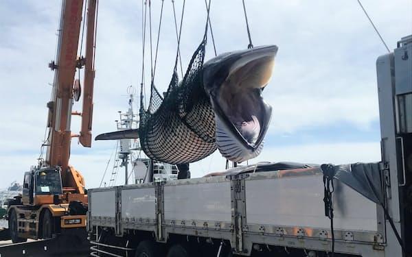 捕鯨産業は新たな需要と供給を探っている(19年、釧路港で水揚げされたミンククジラ)