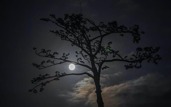 岩手県陸前高田市の「奇跡の一本松」越しに浮かんだ中秋の名月(1日)