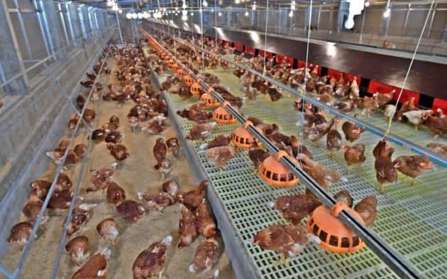鶏が歩き回るスペースを確保したCPフーズのケージフリー農場(タイ中部サラブリ県)