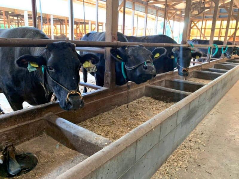 熟豊ファームは全国でも珍しい経産和牛を専門に飼育する畜産業者だ(山口市内の牛舎)