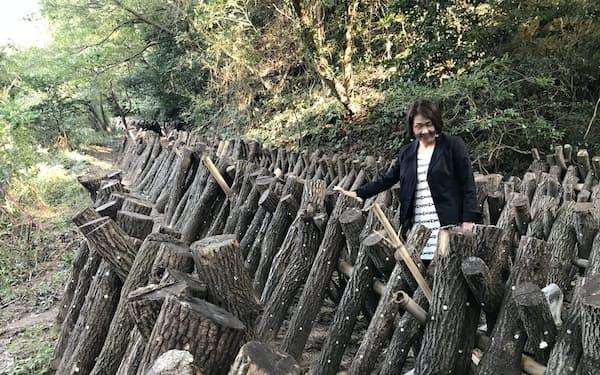 空きスペースで原木シイタケ栽培を始めた(愛媛県今治市の松山シーサイドカントリークラブ)