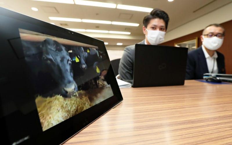 福岡の本店と宮崎の畜産農家をビデオ会議システムで中継し、経営相談を受ける西日本シティ銀行のコンサル担当者(福岡市博多区)