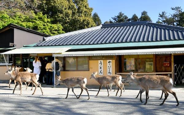 緊急事態宣言下、観光客が激減した奈良公園で鹿せんべい売り場に列を作るシカ(4月、奈良市)