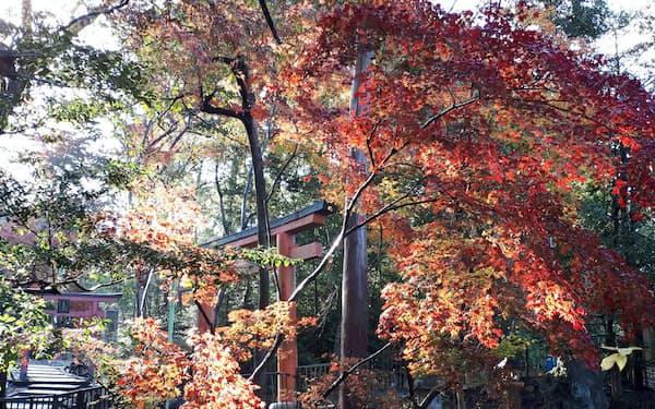 2019年の紅葉は遅めだった(京都市内)