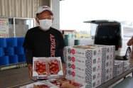 栃木県のイチゴの新品種「とちあいか」が初出荷を迎えた(30日、真岡市)