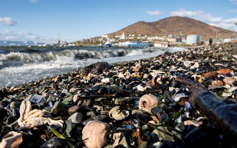 10月8日、カムチャツカ半島の海岸に打ち上げられた大量の海洋生物の死骸=ロイター