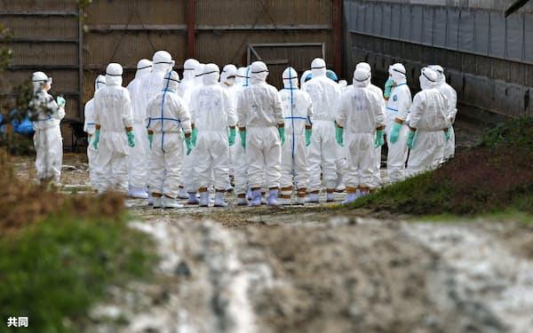 鳥インフルエンザが発生した香川県東かがわ市の養鶏場に集まる防護服姿の関係者=8日午前10時7分