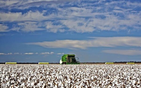 国際対立が続けば綿花の供給が減少しかねない(豪州東部の綿花畑)=ロイター