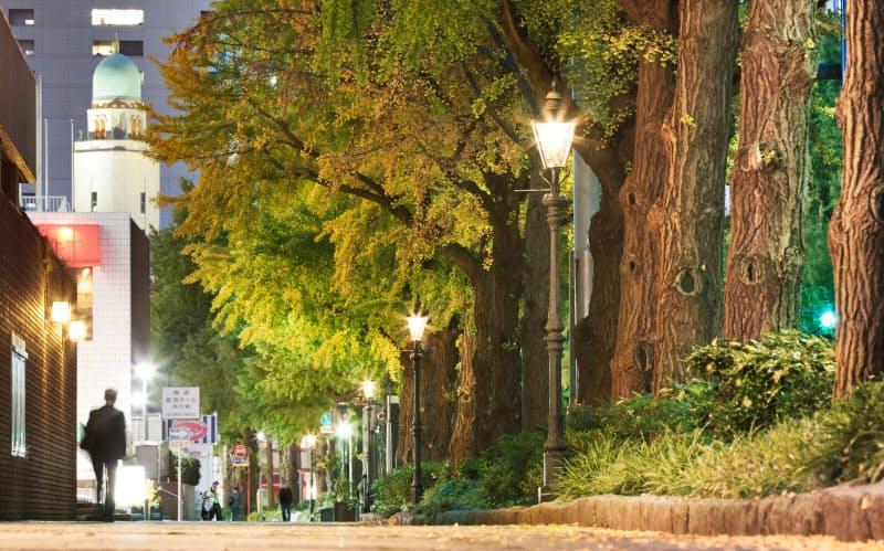 色づき始めたイチョウ並木をガス灯の明かりが照らす。奥に見えるのは横浜税関の塔