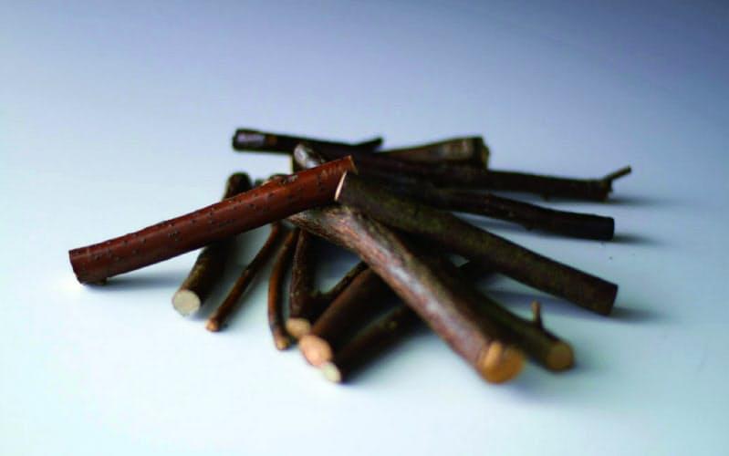養命酒製造が研究するクロモジの枝の部分