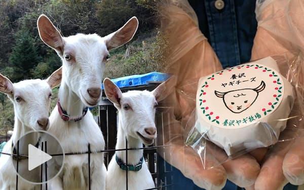 東京都あきる野市で堀周さんが製造しているヤギのチーズ