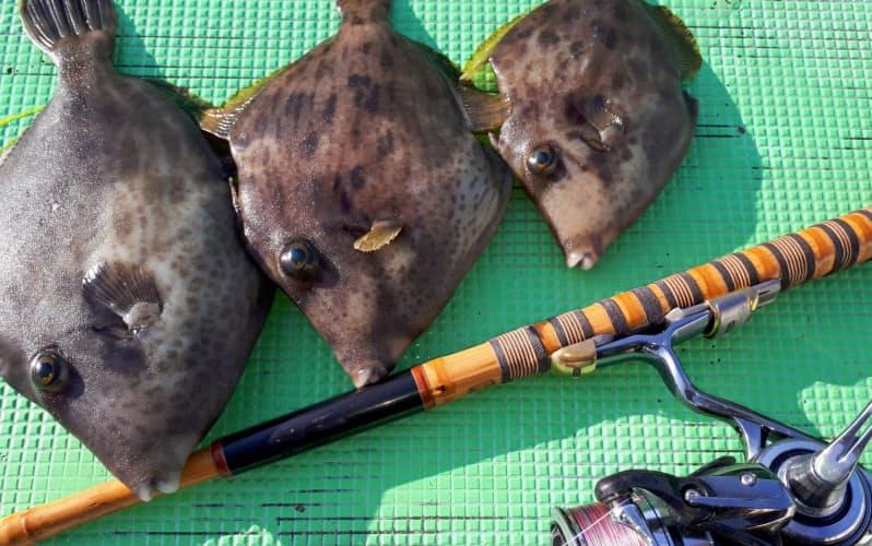 カワハギ釣りの相棒は和竿