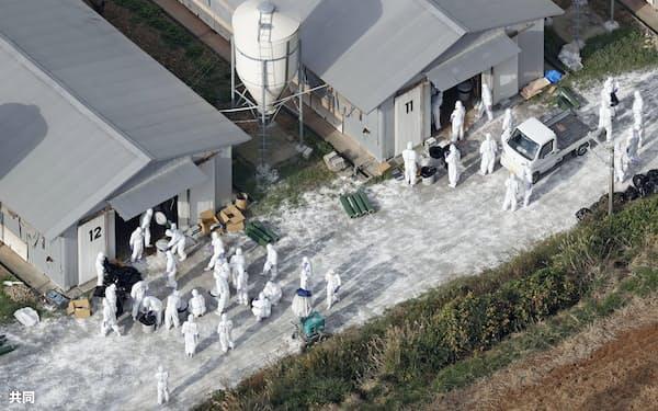 鳥インフルエンザが確認された福岡県宗像市の養鶏場で続く殺処分作業(25日)=共同