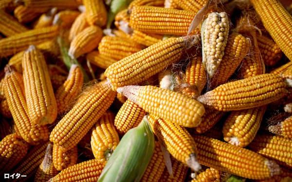 中国では北部地域でトウモロコシを生産している=ロイター