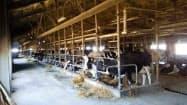 実証研究を進めてきた牛舎(北海道清水町)
