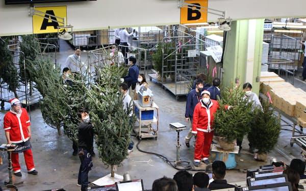 国産モミの木の取引にもコロナ禍の影響が出た(11月下旬、東京都大田区の大田市場内の競り場)