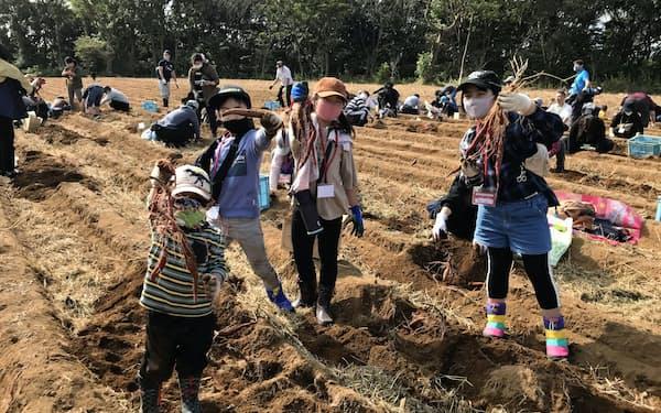 なめがたファーマーズヴィレッジの収穫祭で芋掘りを楽しむ子供ら(11月1日、行方市)