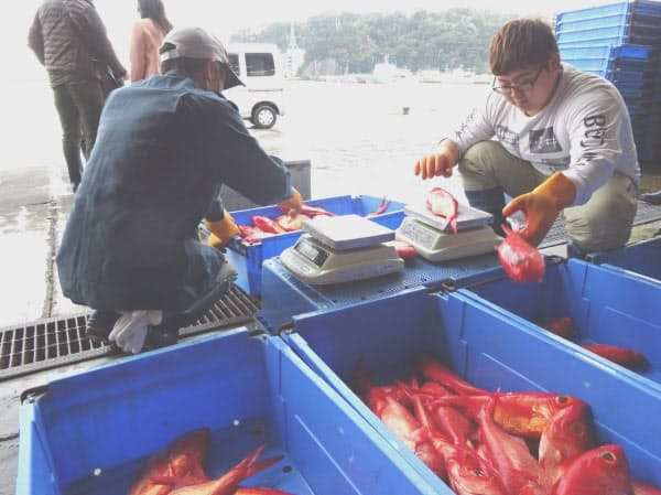 Izukoオリジナル商品では、一般客が入れない下田漁港の市場で水揚げを見学できる