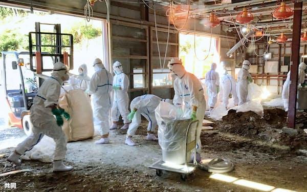 宮崎県日向市の養鶏場で防疫作業をする担当者(1日午前、同県提供)=共同