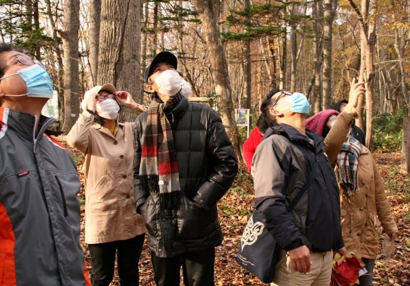 森を散策する江別すずらん病院の患者たち(道立野幌森林公園)