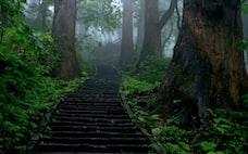 石段が映える寺社10選 日本屈指のパワースポットも