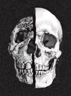遠い祖先から現生人類に至る人類進化の歴史は今、全面的に書き換えられようとしている。画像はイメージ。イラストはKaty Wiedemannによる
