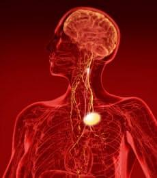 体内にコンパクトな装置を埋め込み、脳に電気刺激を与えることで様々な病気を治療する(提供:BRYAN CHRISTIE)