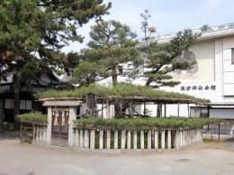 高砂神社にある「相生の松」が由来とされる(兵庫県高砂市)