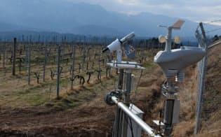 センサーで気象データなどを収集・分析し、ワインの品質に磨きをかける