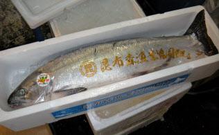 シロザケは秋にかけ漁獲量が増え価格は下がる(東京・築地市場に入荷したトキシラズ)