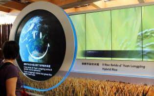 多収穫米のハイブリッドライスについて展示する中国館