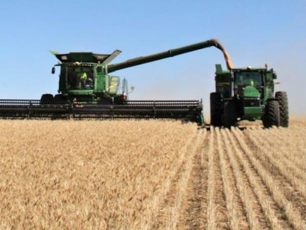 オーストラリアの小麦畑
