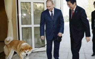 秋田県から贈られた秋田犬「ゆめ」とともに、安倍首相を出迎えるロシアのプーチン大統領(2014年2月、ソチ)=共同