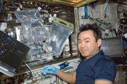 国際宇宙ステーションの日本実験棟きぼうで、メダカの飼育装置を扱う星出彰彦さん(2012年10月)=JAXA提供・共同