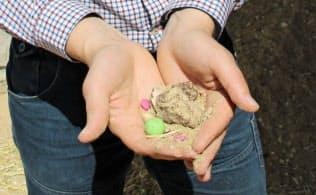 飼料にはカラフルなチョコレート菓子が混ざっている(マユラ・ステーションのスコット・デブルインさん)