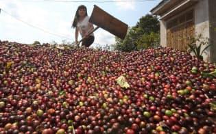 収穫されたばかりのコーヒー豆を天日干しする女性(ベトナム・ダクラク省)