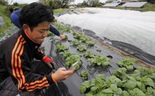 テレファームは農作物の生育過程を写真で契約者に知らせている