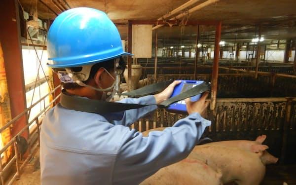 伊藤ハム米久ホールディングスのグループ会社は、カメラで撮影するだけで体重を推定する端末を導入