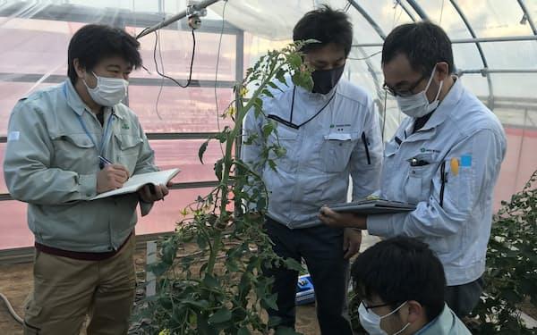 東北特殊鋼と宮城県農業・園芸総合研究所は振動による害虫防除の研究を進める(宮城県名取市)