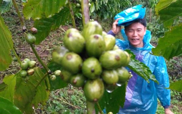 ロブスタ種として米国スペシャルティコーヒー協会から高得点を獲得した例も出てきた(写真はベトナムで高級ロブスタの栽培に取り組むトイ・グエンさん)