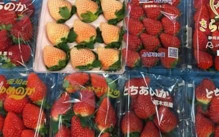 青果市場には各地の大粒品種が流通する(12月、東京都大田区)