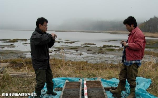 北海道の太平洋沿岸では巨大津波が繰り返し起きていたことを示す堆積物が多くの地点で見つかった(産総研提供)