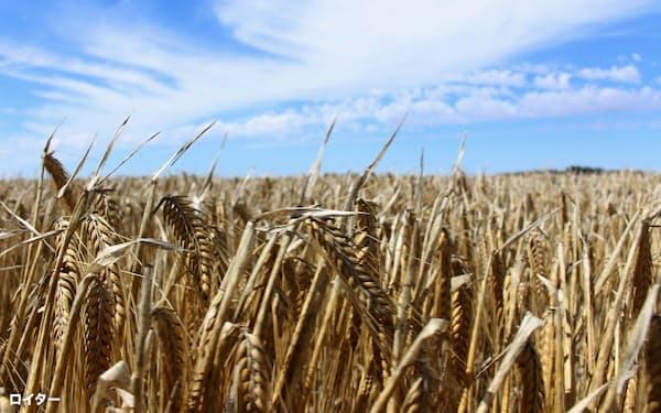 豪州産大麦は中国という巨大市場を失っている(オーストラリアの大麦畑)=ロイター