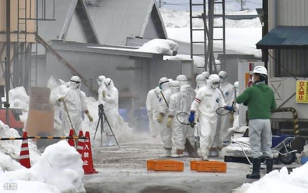 鳥インフルエンザが確認された富山県小矢部市の養鶏場で防疫作業をする作業員(23日午前)=共同