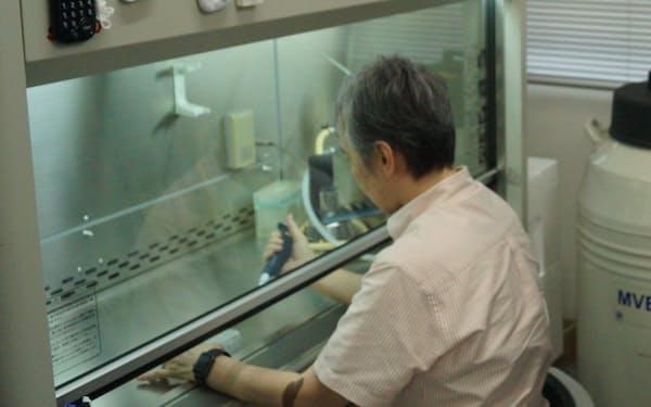 間葉系幹細胞の研究をするPuREC取締役の松崎有未・島根大教授